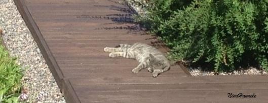 Kissa auringossa