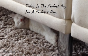ThePerfectDay