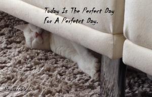 ThePerfectDay