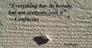 Everything has its beauty...